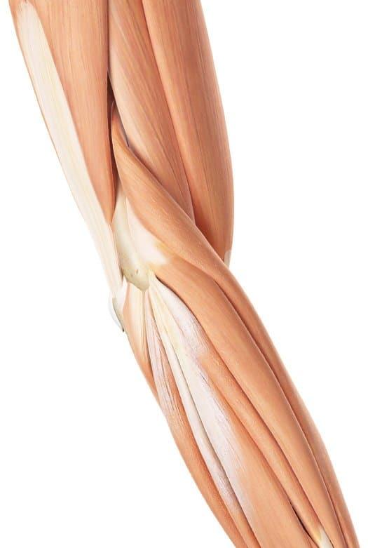 טיפולי פיזיותרפיה אזור מרפק, אמה וזרוע