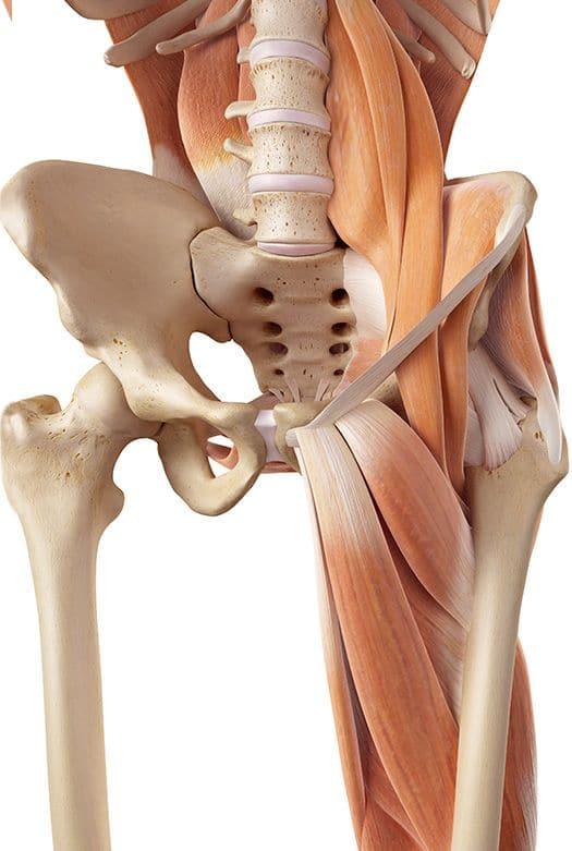 טיפולי פיזיותרפיה: אגן