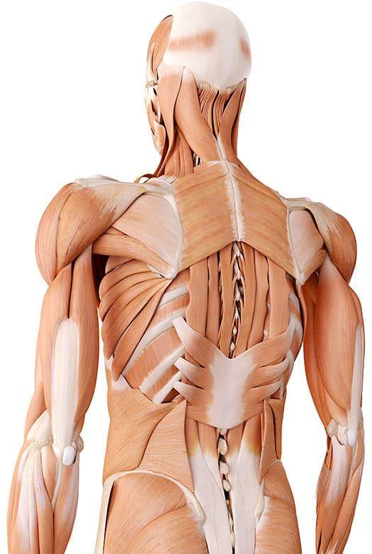 טיפולי פיזיותרפיה: גב וצוואר