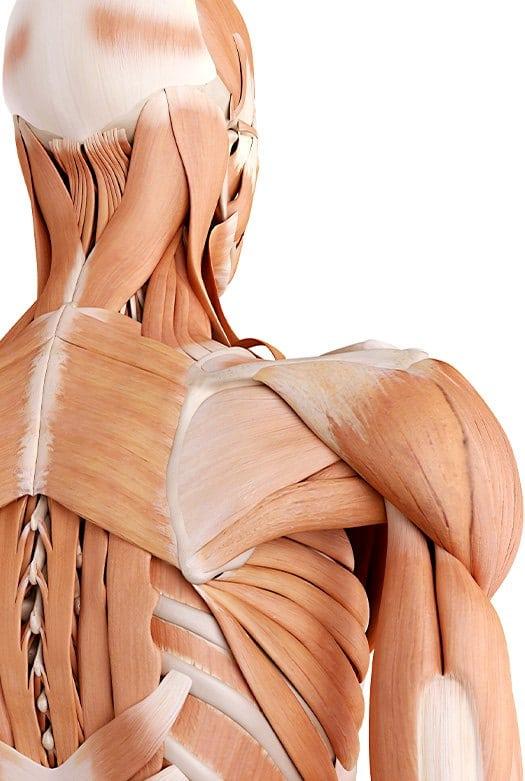 טיפולי פיזיותרפיה אזור כתף